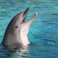 The Sounds of Dolphins