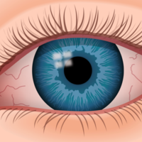 The Anatomy of the Eye