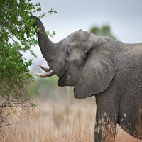 The Eating Habits Of Elephants